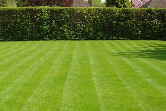 Lawn Laying and Turfing in Burnham on Sea